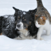 Thumbnail for 12 Winter Safety Tips for Pets